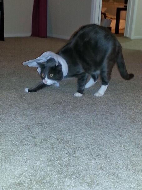 Cat_trapped_12_medium