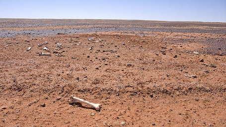 Desert_medium