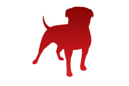 Zynga Dog