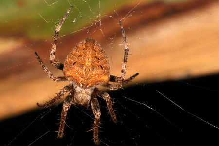 via farm4.staticflickr.com