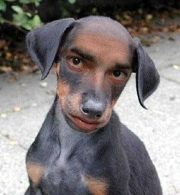 Human-dog_medium