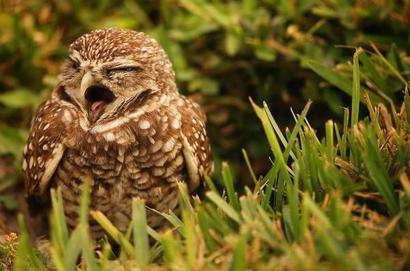 Sleepy-owl-mandy-wiltse