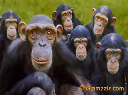 Group-of-apes