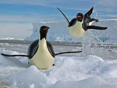 02-airborne-penguin-exits-water_1600