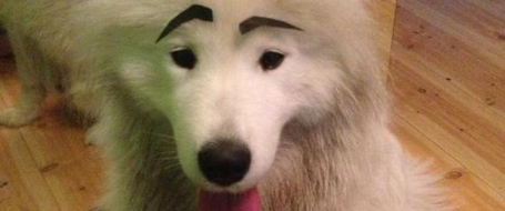 N-eyebrowdog-large570_medium