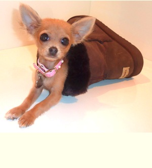 Dog-in-ugg-boots_medium
