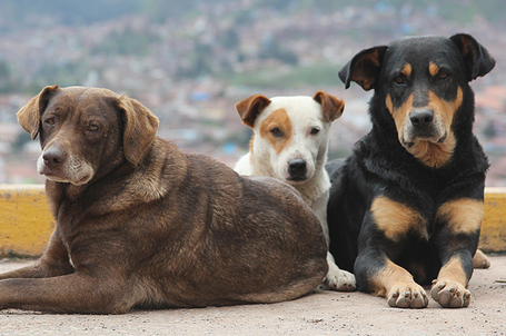 Three-stray-dogs_medium