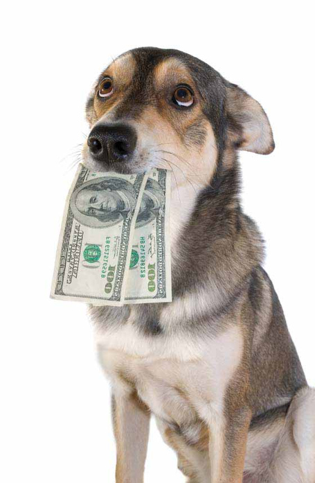 Money-dog_medium
