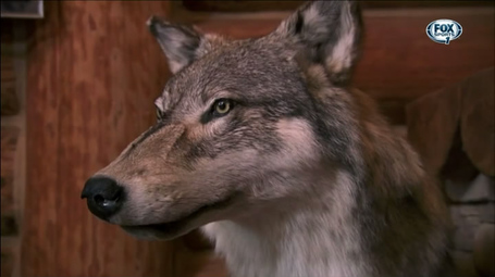 Wolf-head_medium