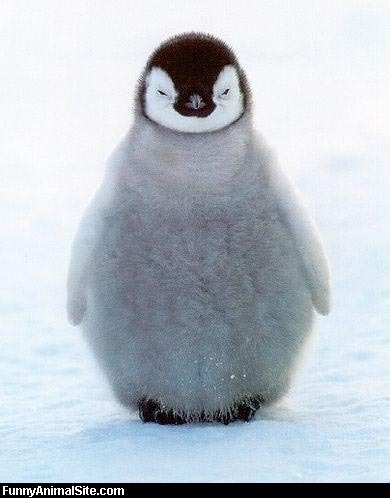 Fat_fuzzy_penguin_medium