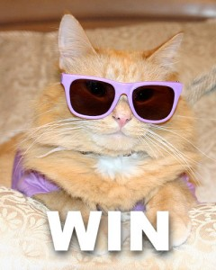 Hipster-cat-win-240x300_medium