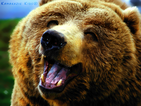 Happy_bear_by_kamakaziekids-d4hn3x2_medium