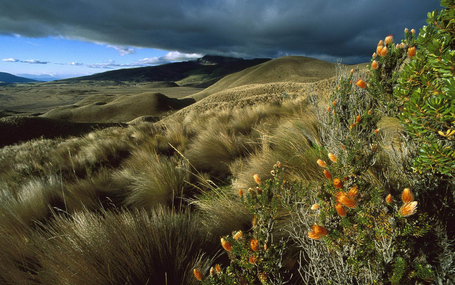Natural-scenery-ecuador_medium