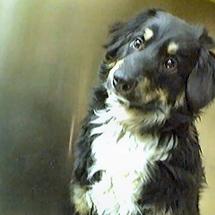 Buddy_s_adoption_photo