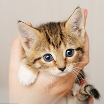 Little_cat_by_hoschie