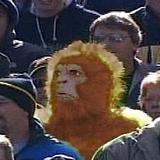 Bon_monkey