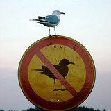 Birdnobird