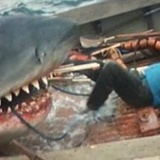 Jaws_eating_captain_quint