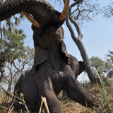 Elephant_pic