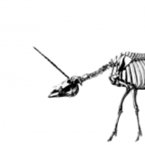 Unicornskeleton
