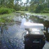 Gd_swamp