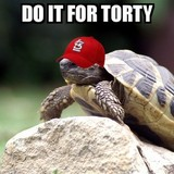 Torty_the_tortoise