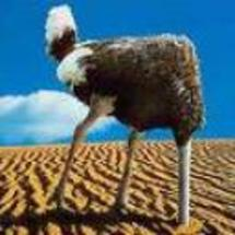 Ostrich-head-in-the-sand_thumbnail