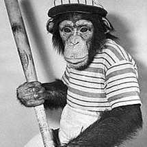 Monkey-holding-baseball-bat
