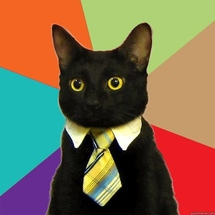 The-best-of-the-business-cat-meme