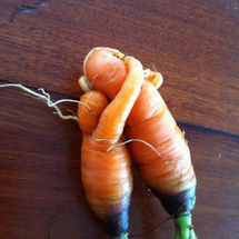 Carrot-love