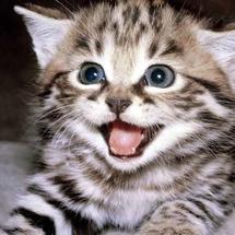 Khout-kitten-458882