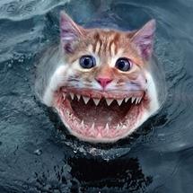 Cat_shark__2_