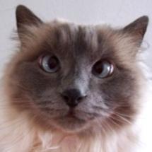 Cross-eyed-cat_small