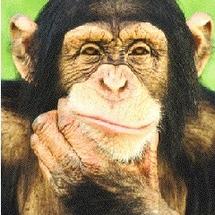Chimpanze-pensif