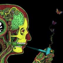 Smokeanatomy