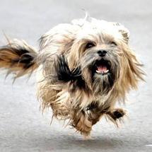 Bezpanski-pies-przed-siedziba-parlamentu-w-bukareszcie
