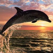 6213_dolphin_sunset_jigsaw_puzzle_lg3