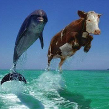 Cow-dolphin