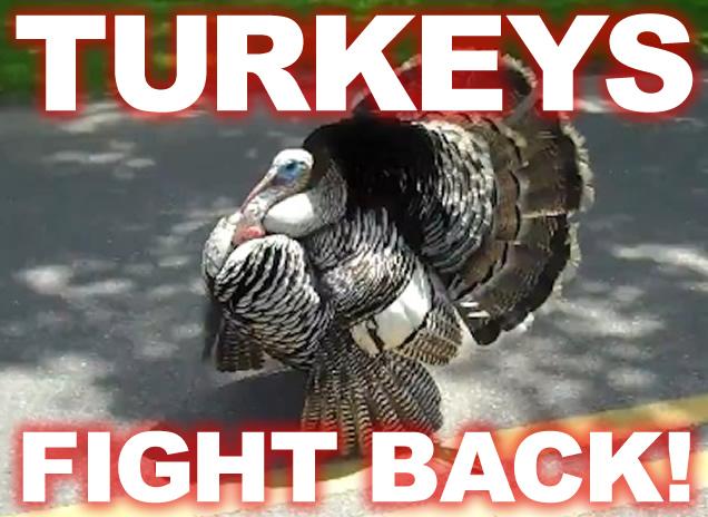 turkeys-fight-back-thanksgiving.jpg