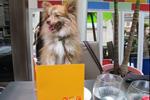 2011_dog_menu_zagat1.jpg
