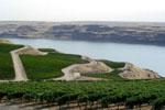 Washington-Wine.JPG