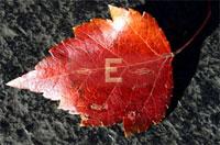 2007_09_efp.jpg