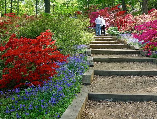 nationalarboretum.jpg