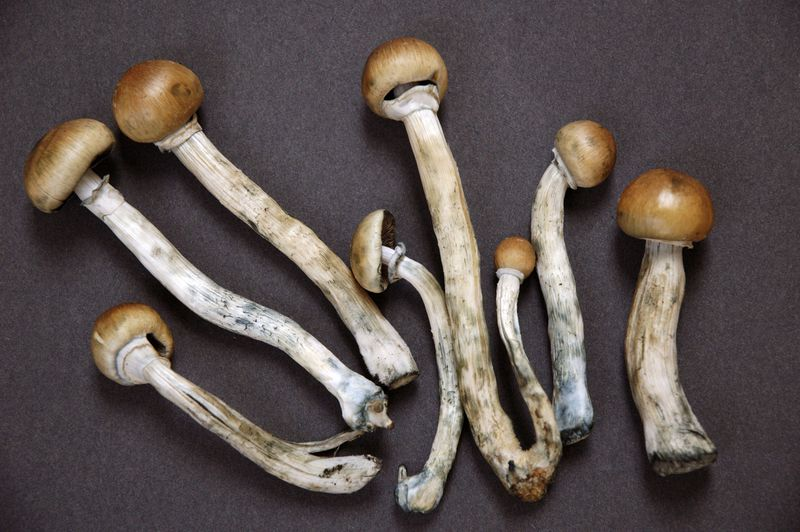 Psychedelic mushrooms.