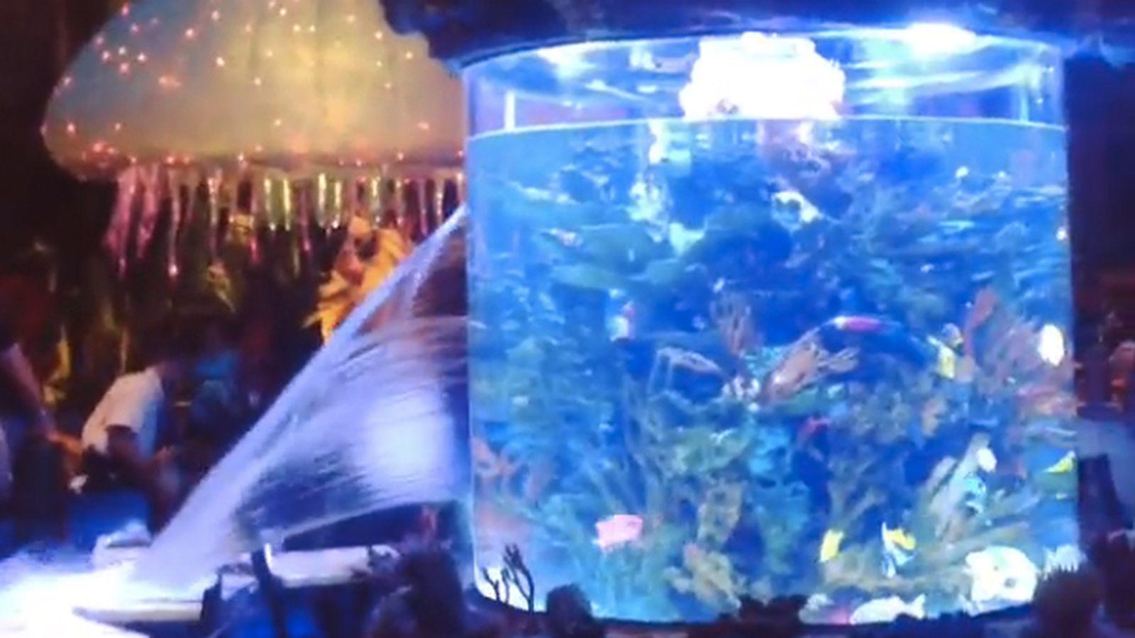Watch a fish tank burst in a disney world restaurant eater for Disney fish tank