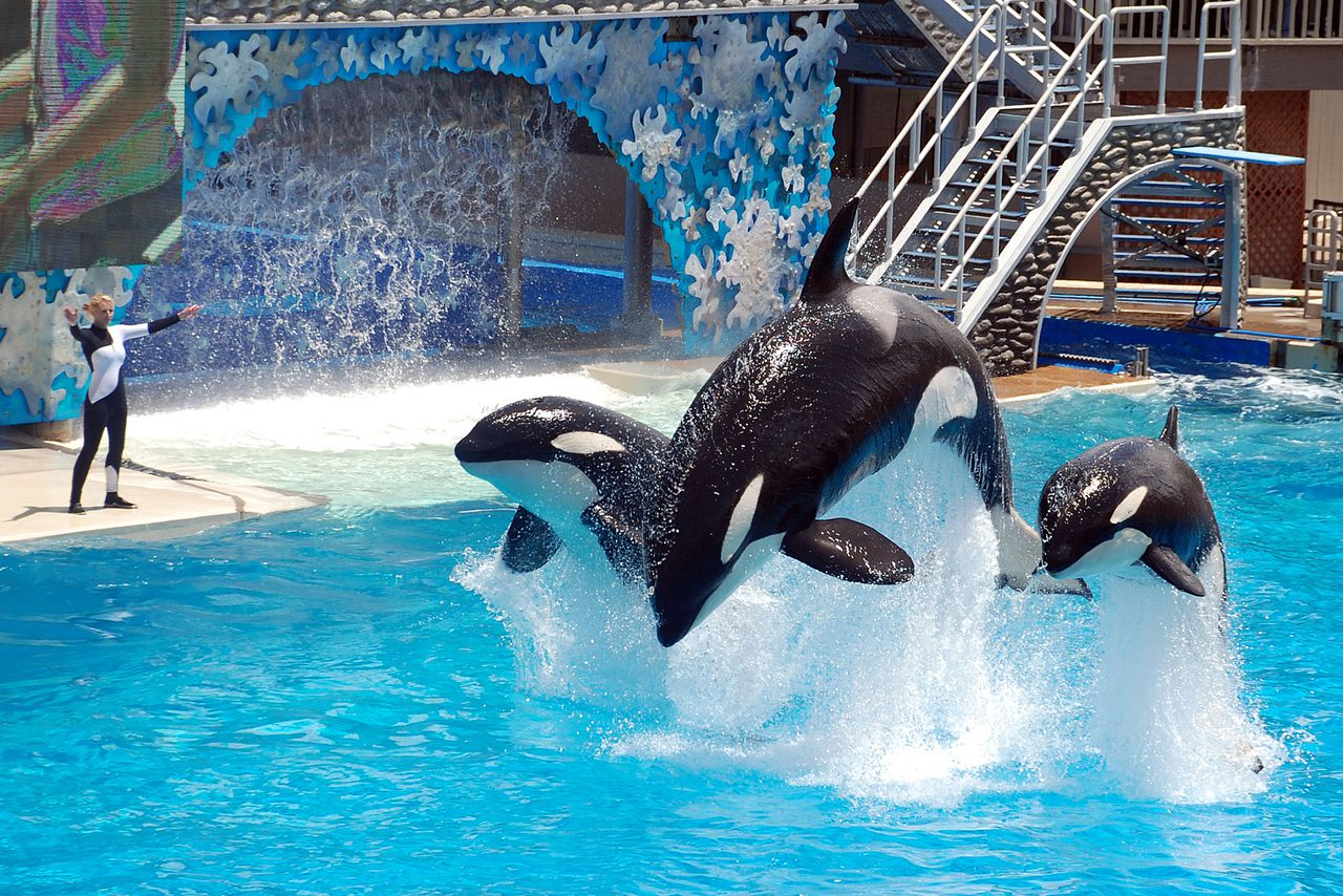 SeaWorld Partners With Humane Society Of The United States