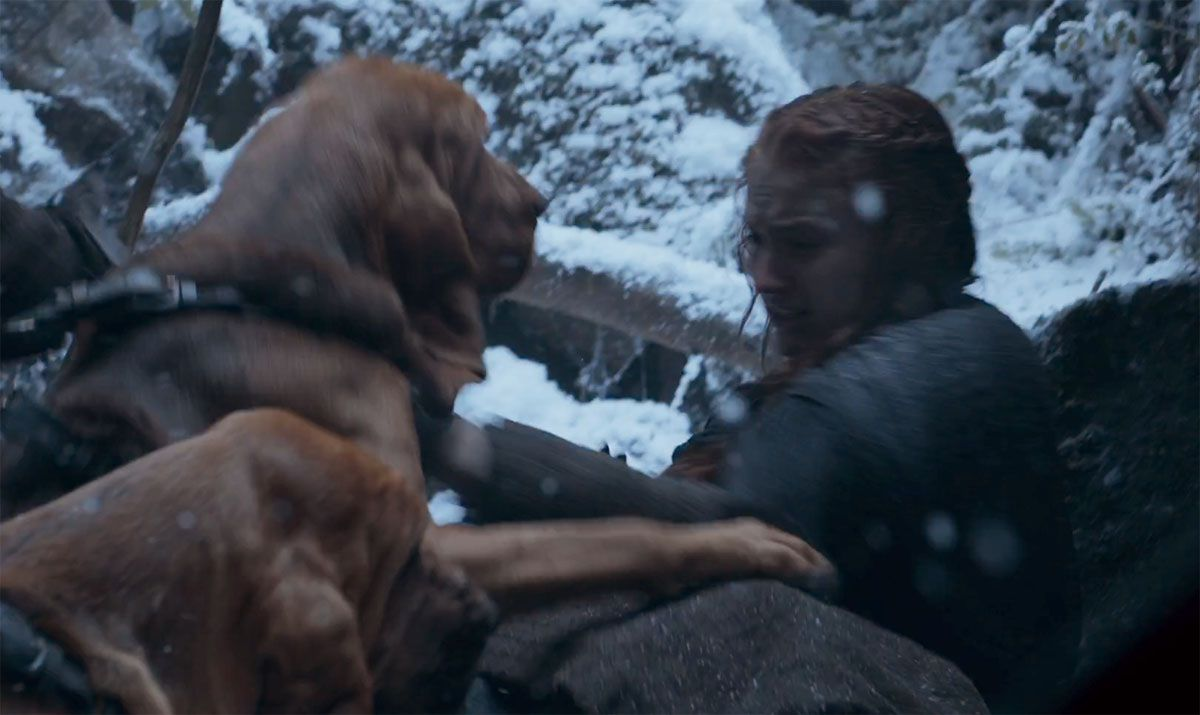 A Bloodhound To Die For 'Game of Thrones' scor...