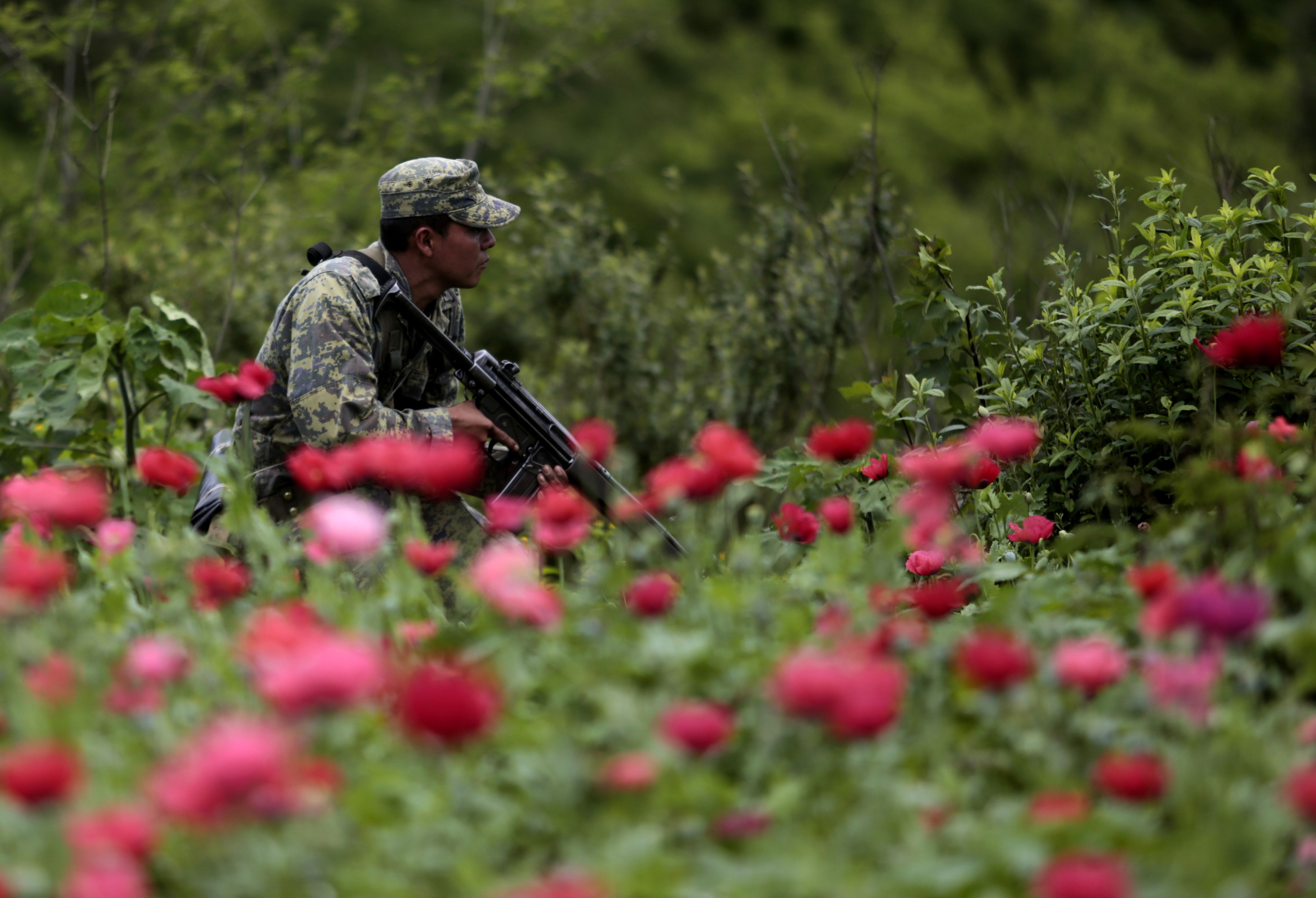 the war on drugs in america Discover librarian-selected research resources on war on drugs from the  america's war on drugs had seen a reduction in the use of  drug war zone: frontline.