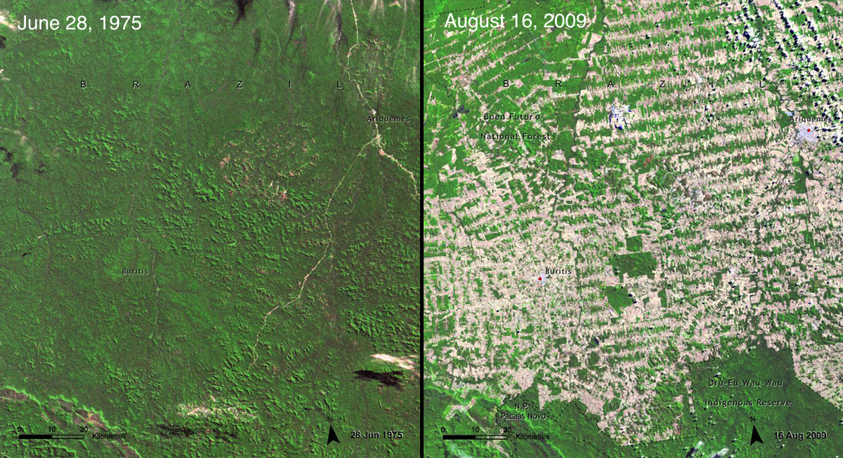 Image result for amazon deforestation before and after