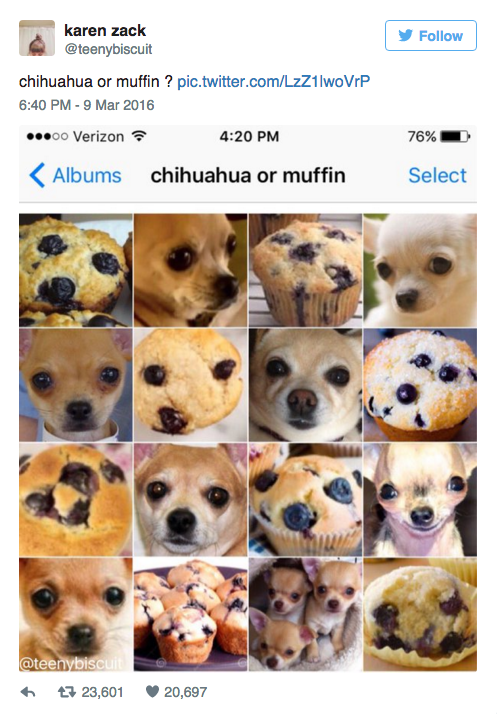 blueberry muffin or chihuahua have you ever noticed chihuahuas look exactly like 5514